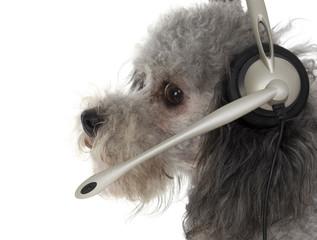 customer service pup