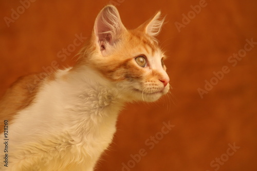 poster of the bug,cat,feline,orange tabby,orange,tabby,cute,