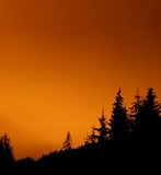 fir forest at night - red sky poster