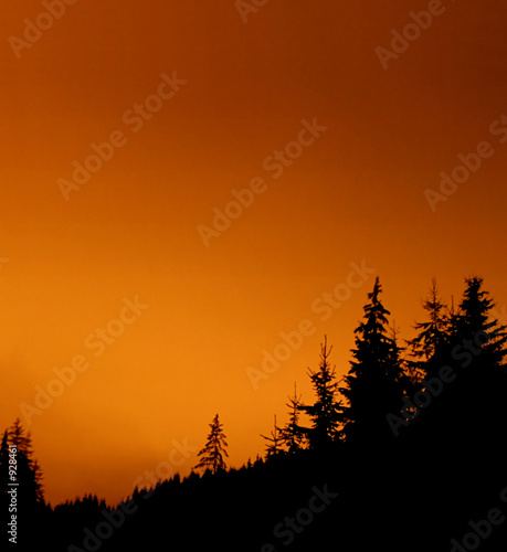 fir forest at night - red sky
