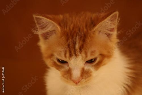 poster of the bug,cat,feline,orange tabby,orange,tabby,cute,