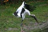 stork wings poster