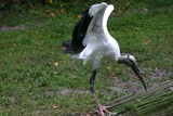 full stork poster