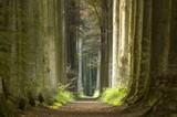 nature pathway - 932032