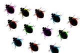 team of coloured ladybugs.isolated on white poster