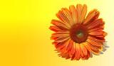bright orange flower poster