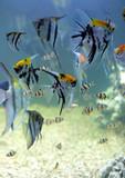 poisson n°12