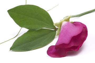 beauty flower. garden