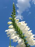 flower form poster