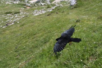 vogel im anflug