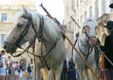 parade des chevaux poster