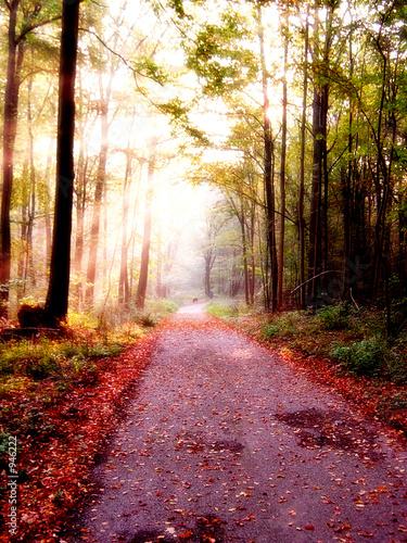 canvas print picture chemin d'automne