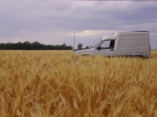 camionette dans le champ