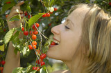 nice girl in the garden with cherry poster
