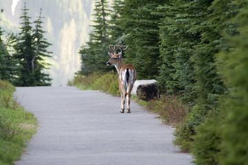 trailside buck