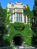 vine covered university building poster