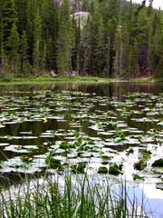 nymph lake 3