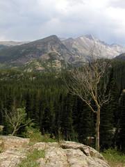 aspen in mountain view