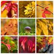 roleta: couleurs d'automne