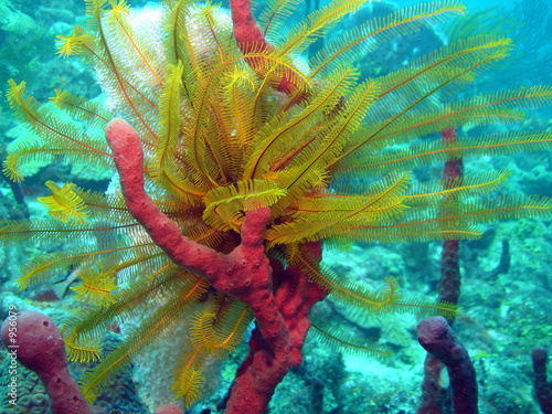 vegetation sous-marine