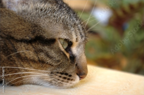 cat on blurred background