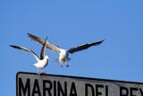 seagull at landing poster