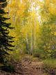 gold path