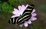 butterfly landing on flower poster