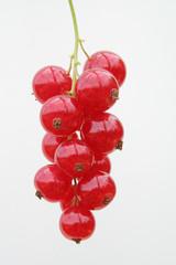 rote johannisbeere traube