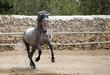 caballo6677