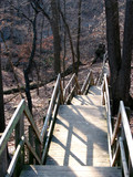 wooden path stairs forest poster