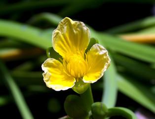 flower 89