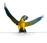 macaw on sign edge poster