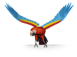 scarlet macaw on sign edge - with clipping path