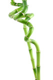 lucky bamboo stems poster