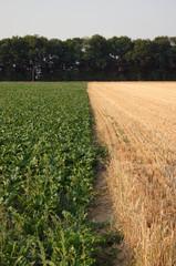 crop change