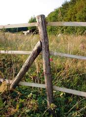 log fence post