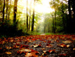 canvas print picture feuilles d'automne