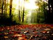 Leinwanddruck Bild - feuilles d'automne