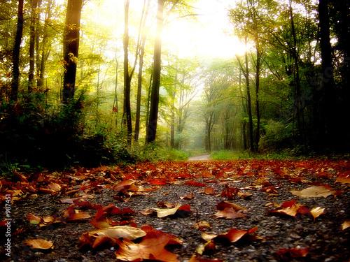 Leinwanddruck Bild feuilles d'automne
