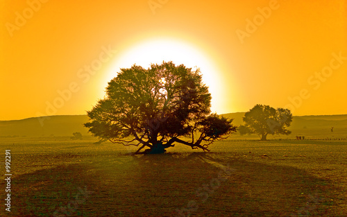 sunset and a tree