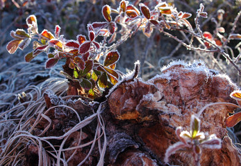 frosty morning flora #2