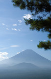 mount fuji with pine tree poster