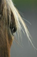 study of horse #2