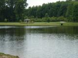 pretty pond poster