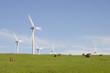 éoliennes à la campagne