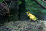 yellow frog poster