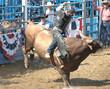 Leinwanddruck Bild - bucking bull & rider