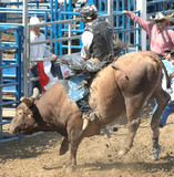 bucking bull & rider poster