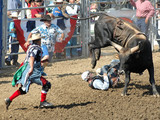 bull throwing a cowboy